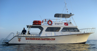 46' Dive Charter in California